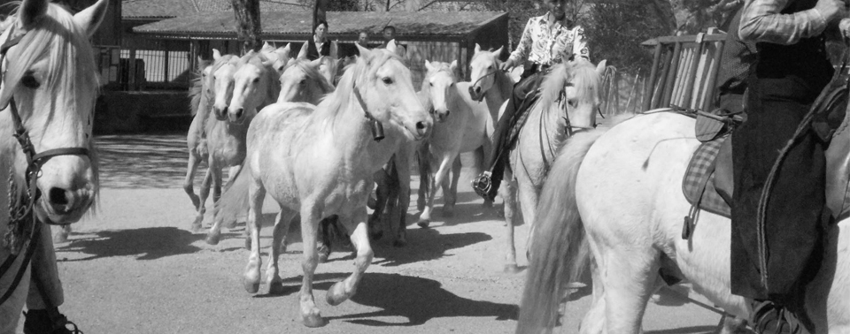 chevaux nb