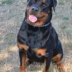 Brutus (1)
