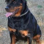 Brutus (2)