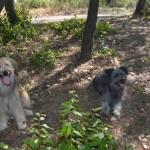 Pouchinette & Pouppy